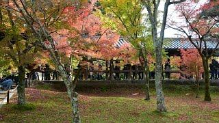 東福寺の2015紅葉 Kyoto Tofukuji Temple Autumn Leaves