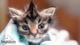 Nano the tiniest kitten thumbnail