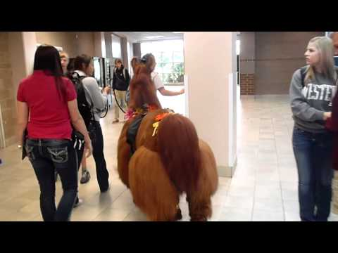Rojo the Llama Visits Skyview High School