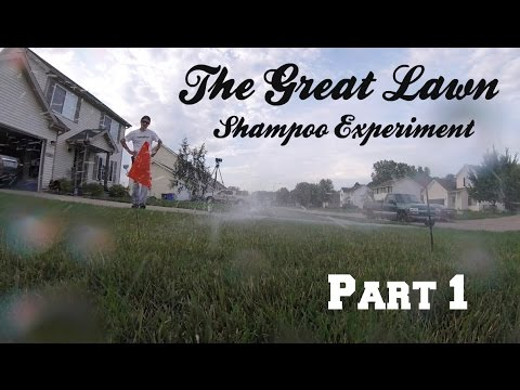 The Great Lawn Shampoo Experiment - Part 1