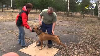 Работа инструктора кинолога, обучение владельца дрессировке собаки