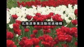 だいすき!北海道 上湧別チューリップ公園 ‐湧別町 ‐