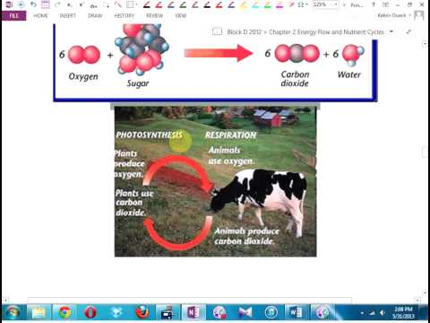 Science 10 Section 2.2 Nutrient Cycles