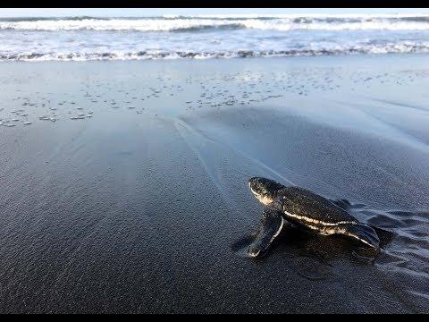 2048 - The Sea Turtles of Costa Rica