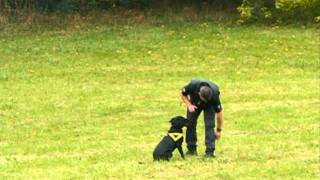 North Wales Police - Dog Display