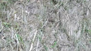 EAA AirVenture Oshkosh Warbird Camera