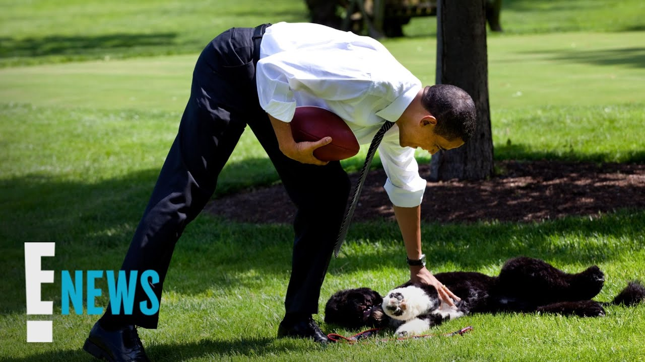 Obama family dog Bo dies following battle with cancer, Barack and ...