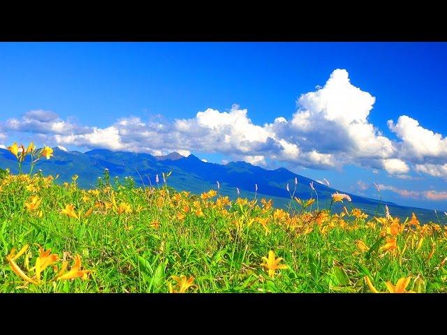 4K Japan 絶景 癒し 自然映像 夏の霧ヶ峰高原 ニッコウキスゲと八ヶ岳  Summer of Kirigamine plateau Day lily and Yatsugatake