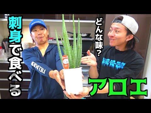 植物のアロエを刺身で食べてみた!