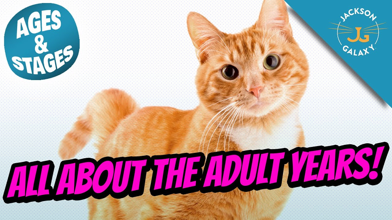 Download Cat Ages & Stages: All About the Adult Years!