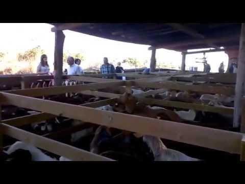 Cita con las cabras en Merlán