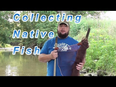 Collecting Native Fish