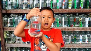 Drama Praya Beli Ikan Cupang Di Pasar Ikan