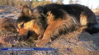 В Лиде пес показал свою преданность погибшей подруге.