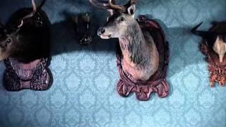 Diema 2 - Deer - Ident
