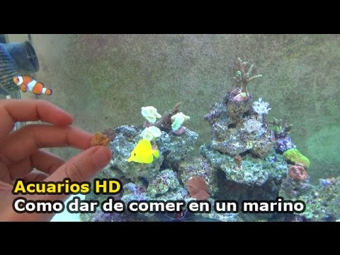 Acuario de 400 litros con goldfish funnycat tv Antialgas para estanques con peces