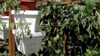 HYDROPONIC VERTICAL GARDEN VIDEO #2
