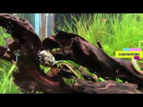 toko-aquarium-di-jepang-|-aquascape-ikan-hias-di-tokyo-|-surganya-pecinta-aquascape-|-aquarium