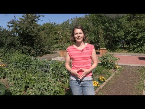 What Grows Where You Live in Alaska? – In the Alaska Garden with Heidi Rader