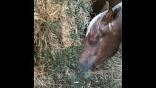 Types of hay for horse - Alfalfa, Rye, Oat - Rick Gore Horsemanship