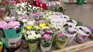 видео Где купить комнатные растения в Киеве