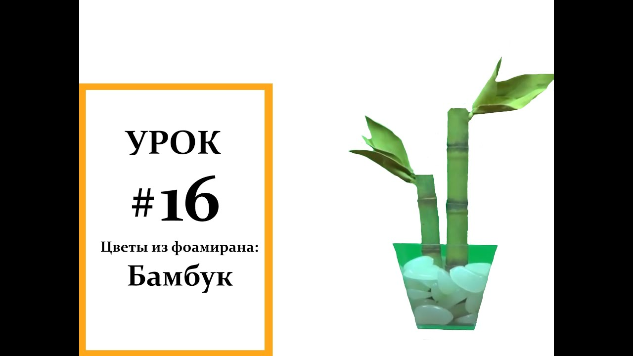 13 май 2003. Тогда живые листья нафотосинтезируют сахаров и покормят. А может кто нибудь знает где можно купить настоящий бамбук, или.