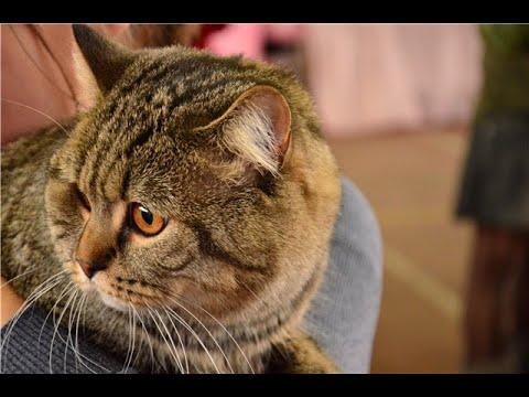 Вот британец, алабай… Кого хочешь – выбирай! Кота выбросили на помойку с простой запиской в 2 строки