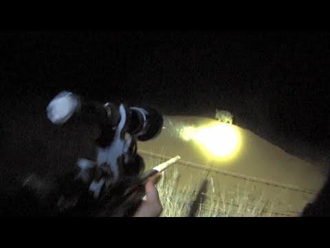 Lights…Camera…Action! Lockdown classic night pig/hog hunt!