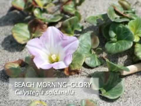 Coastal Native Plants (Part 1 of 3)