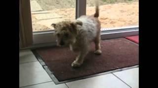 Воспитание домашних животных