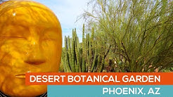 DESERT BOTANICAL GARDEN visit - PHOENIX AZ