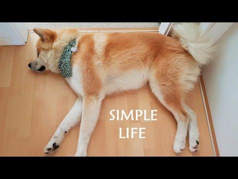 Akita Inu - Life is simple ()