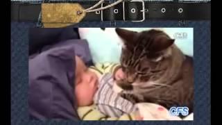 Супер  Смешное видео  милые кошки и дети!Лови улыбку Угарный ржач! Подборка приколов с животными