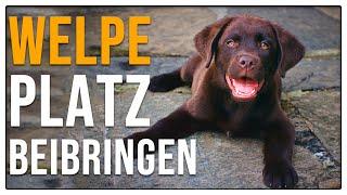 Welpen Platz beibringen - 4 Varianten - Hundeschule Welpenschule Stadtfelle