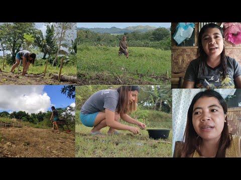 Download tanom nag indian mango assistant nahus pader  || Rosalie Mayora