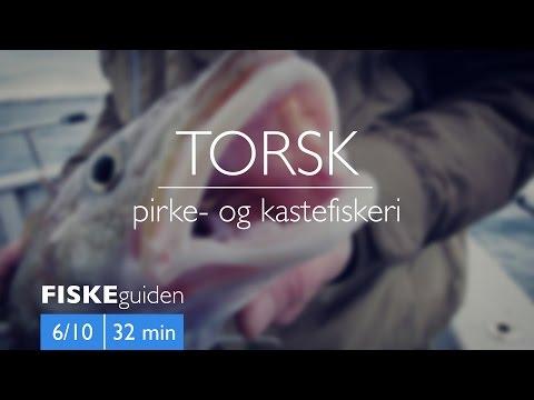 FISKEguiden 6/10: Torsk