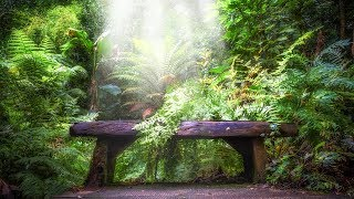 Meditation Music for Anxiety & Stress: Healing Harp & Flute Enhance Positive Energy