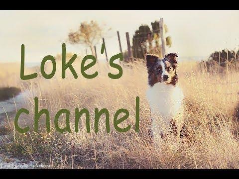 Loke's channel - clicker training tricks and behaviors