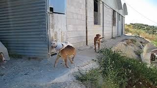 Group dog 9