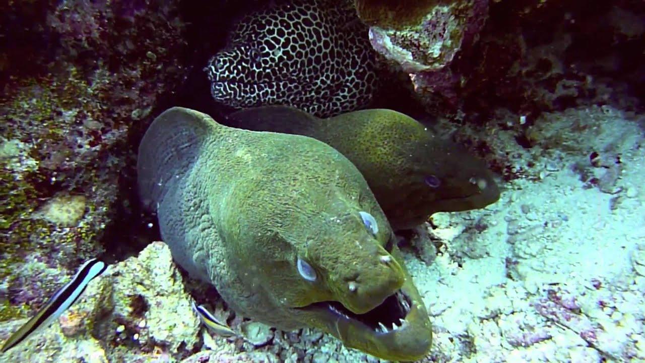 Malediven Gefährliche Tiere
