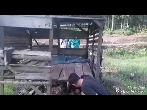 LUKMAN TERENDUS POLISI TRANSAKSI. GANJA Mp3