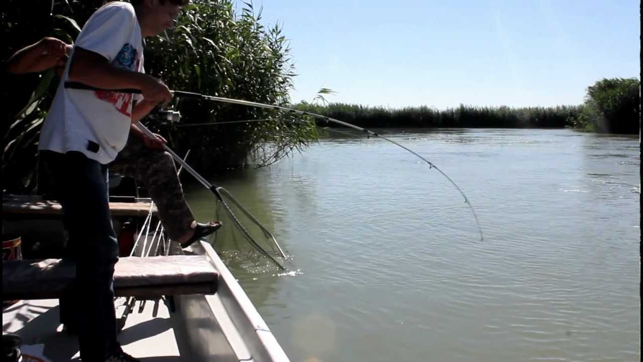 ловля амура на технопланктон