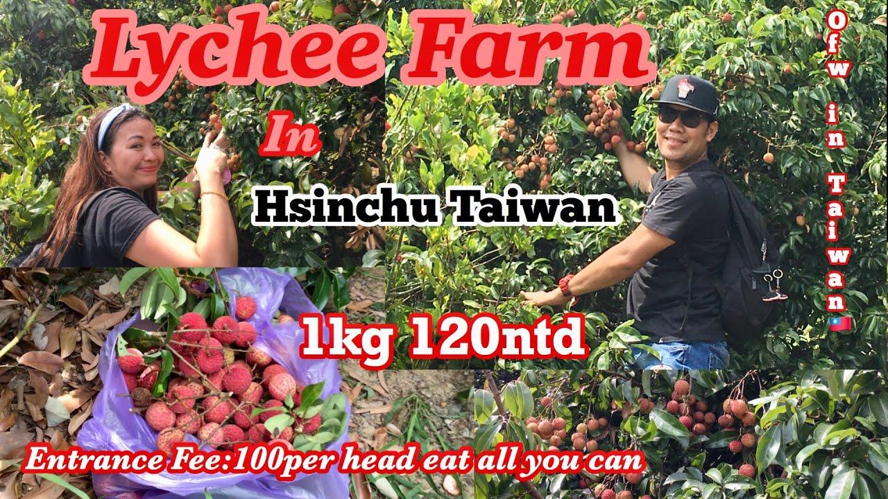 Lychee Farm In Hsinchu Taiwan Best Experience Ever Hector Jordan Jonaspeaks Vlog Youtube