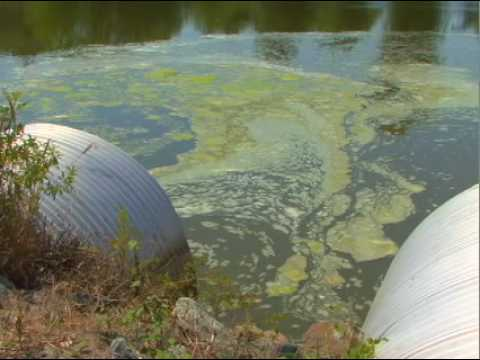 Algal Blooms Hit Center Stage