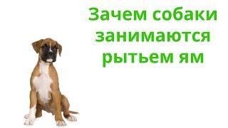 Почему Собака Роет Яму & Для Чего Собака Роет Яму. Ветклиника Био-Вет