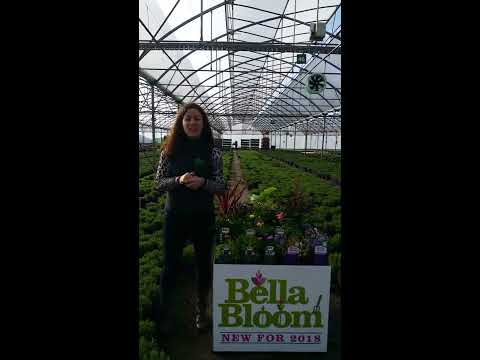 Bella Bloom Plants for garden centres