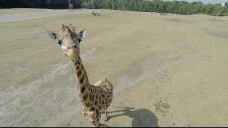  WOUW! Luchtopnames Safaripark Beekse Bergen Hilvarenbeek Drone  (UltraHD 4K)