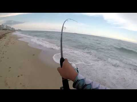 Trini SURF FISHING on Fort Lauderdale Beach - Florida - PT 2