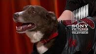 Sweet Sundance – The Gong Show - Продолжительность: 2 минуты 17 секунд