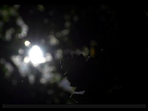 "Relaxing Classical Music: Beethoven - Piano Sonata ""Quasi Una Fantasia"" (Moonlight Sonata)"